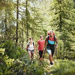 Three hikers in the forest in summer