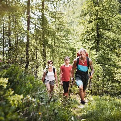 Drei Wanderer im Wald im Sommer