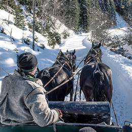 Horse carriage ride in winter