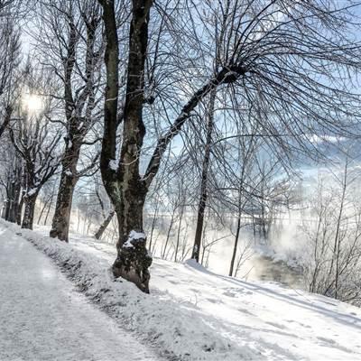 Winterlandschaft mit Bäumen bei Sonnenschein